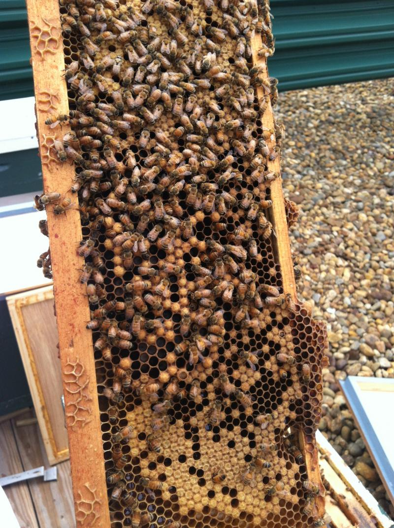 Despite this being the first year for these hives, they've establisehd themselves well