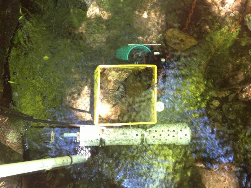 Overhead view of a N.H. EPSCoR sensor at Saddleback Mtn. in Deerfield, partially contained in a milk crate.