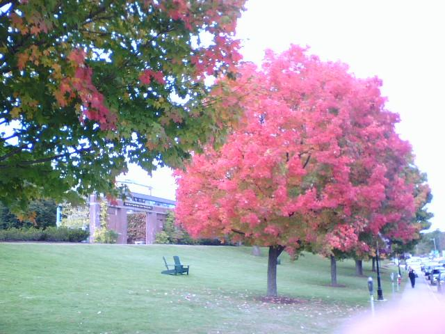 Color on the Lawn at the Silver Center for the Arts at P.S.U.