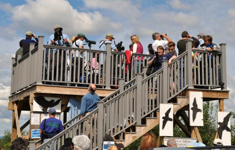 The observation deck at Carter Hill on a busy day. With placards to help identify the raptors by silhouette