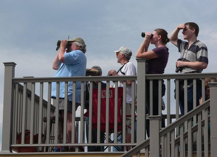Hawk-watchers in the act at Carter Hill Orchard.