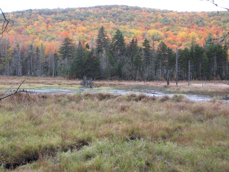 Black Brook Bog Tree Farm in Warren