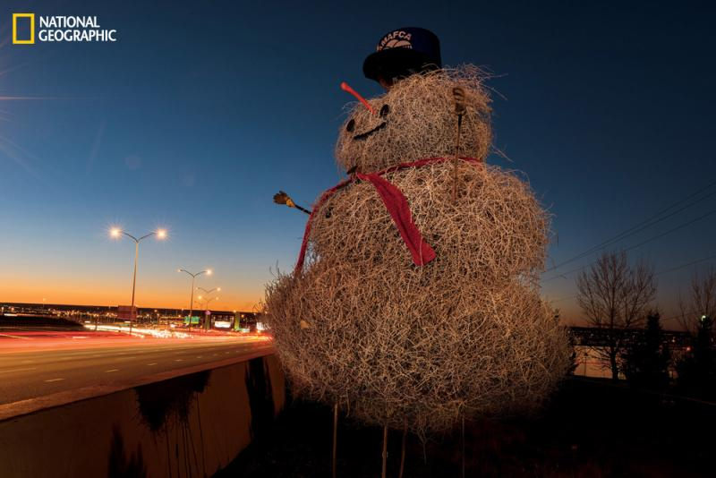 Each Christmas season a tumbleweed snowman, built by New Mexico's Albuquerque Metropolitan Arroyo Flood Control Authority, rises along Interstate 40. At 13 feet, the 2012 snowman was the biggest yet.