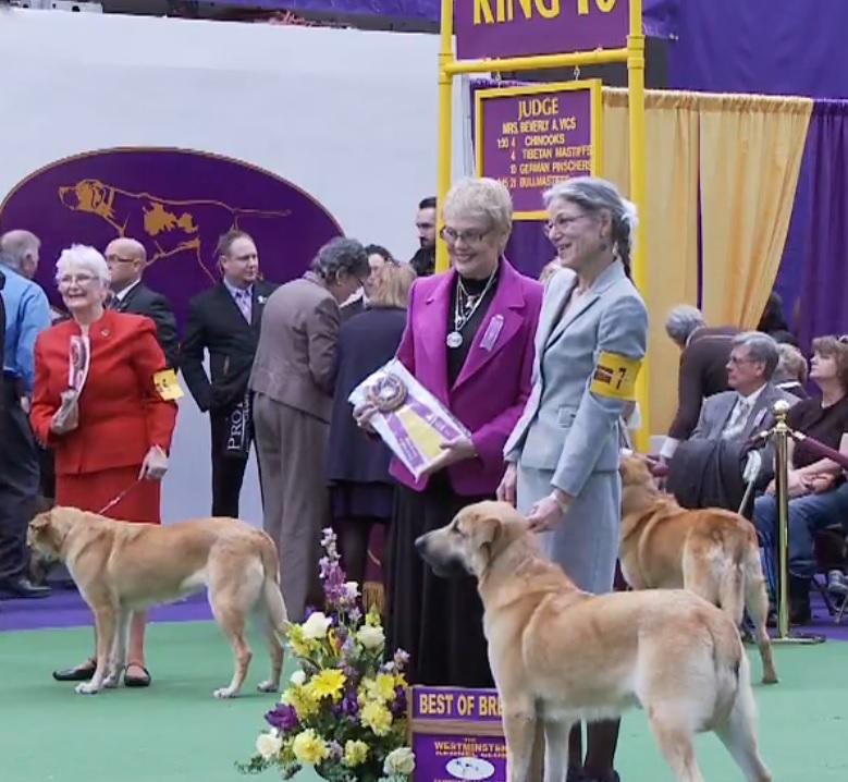 Birr Wins Best of Breed