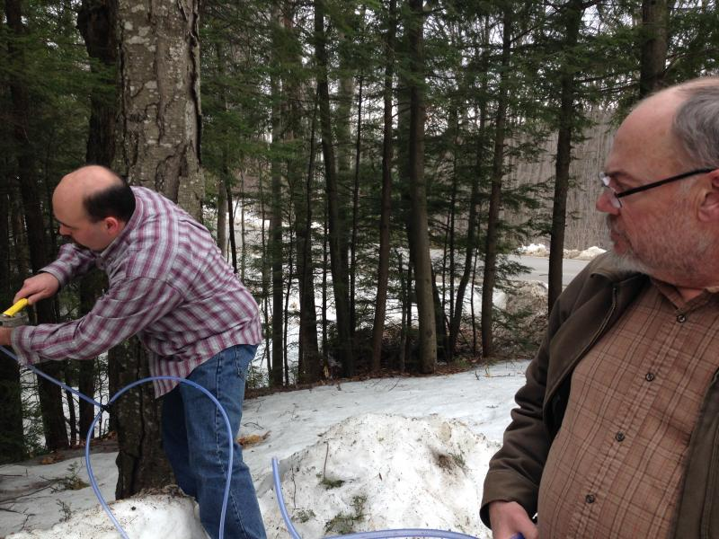 Peter Ashworth (right) watches as his son James hammers a tap into a black birch tree.