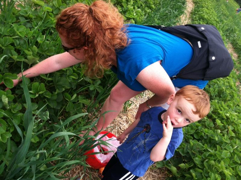 Kristen Stevens and her son Everett pick strawberries at J&F Farms in Derry.
