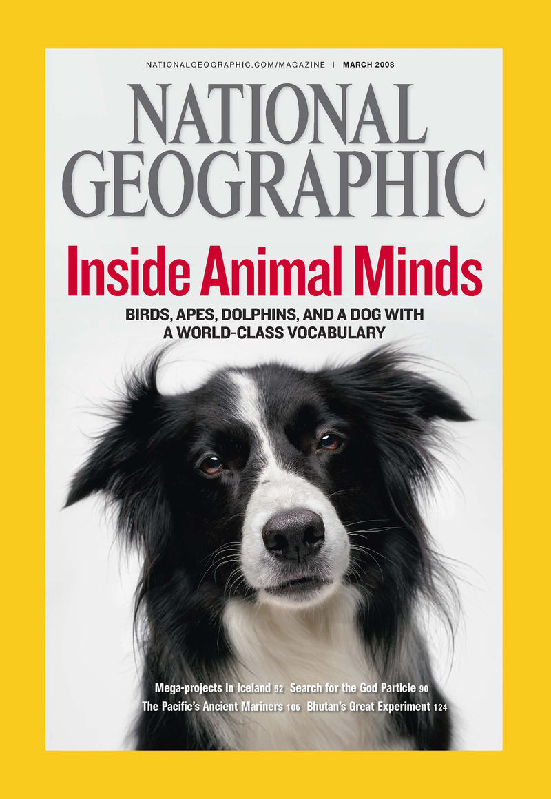 """Betsy"" is one smart border collie. She understands 340 words, and she'll pose for a portrait without bribery."