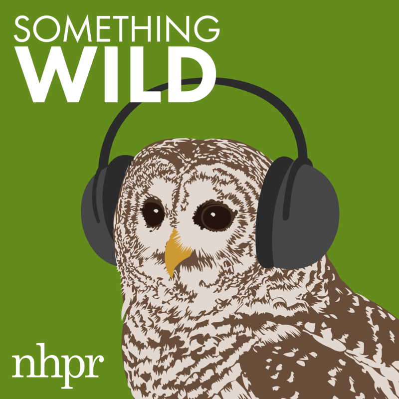 Look for this logo when you search for Something Wild on iTunes