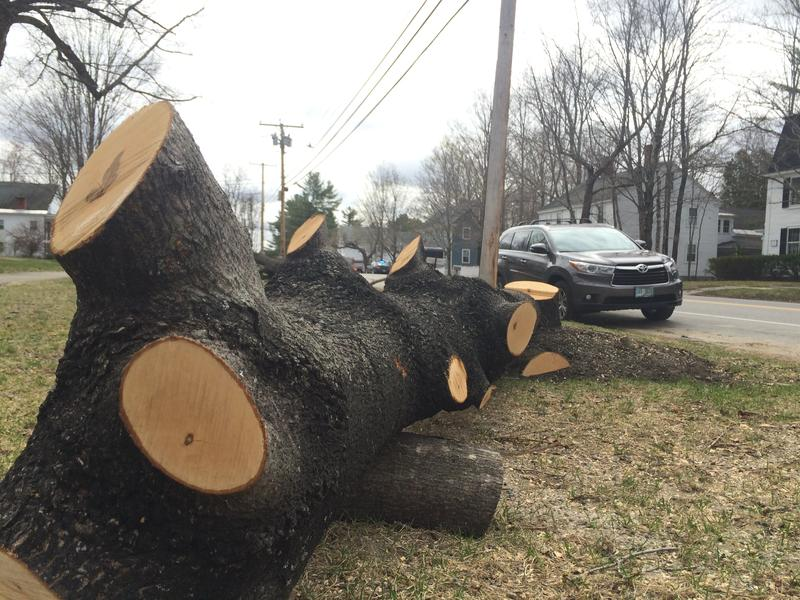 On Main Street in Hopkinton, more than a dozen trees that had grown up too close to power lines had to be removed.
