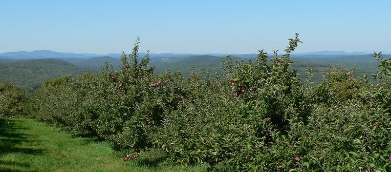 The view from the apple orchard at Gould Hill Farm in Hopkinton