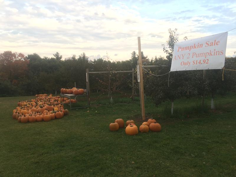 At Carter Hill Orchard in Concord they sold three times as many pumpkins as last year.