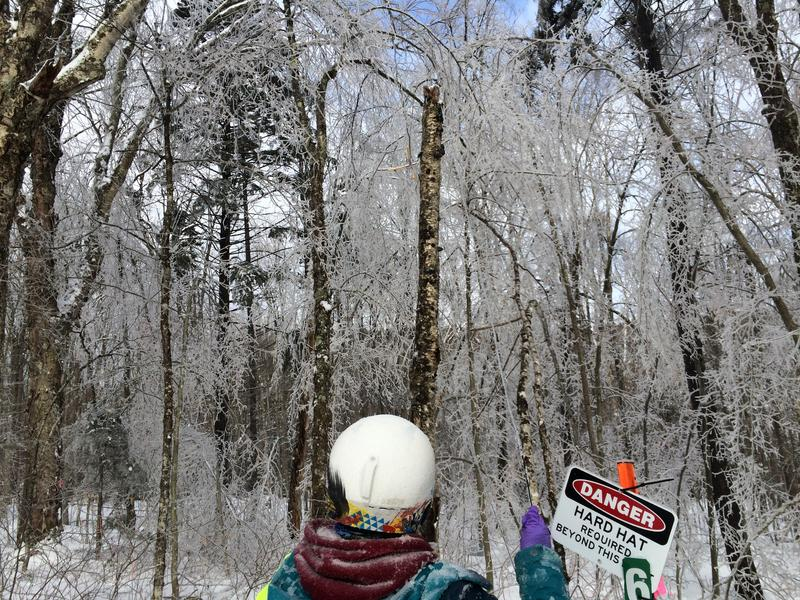 A researcher surveys a plot of forest that has been sprayed with water to simulate an ice storm