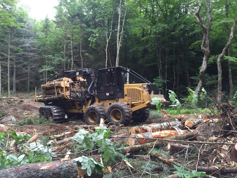 The forwarder is hauling logs from the cutting trail to the landing.