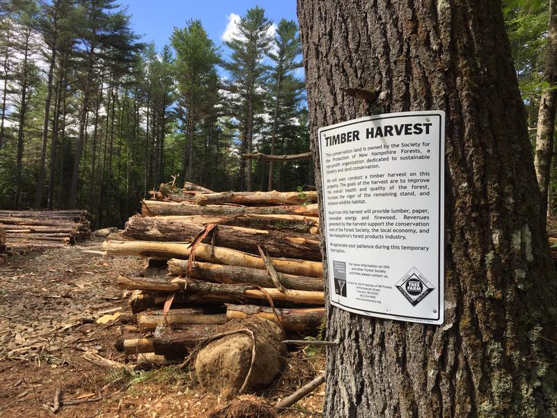 The landing at the Crider and Rumrill forest timber harvest in Stoddard, NH.