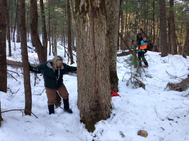 Tom Howe with his rifle and Carrol County Forester Wendy Scribner looking at the tree.