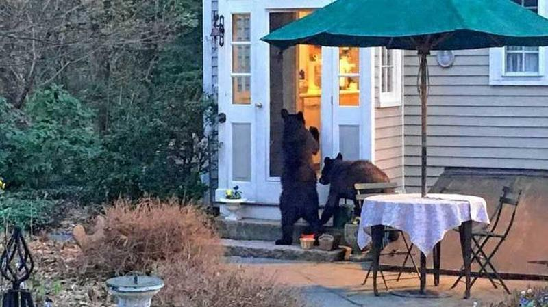 This photo is taken from an online petition on change.org that hoped to save bears in the Hanover area. (JED WILLIAMSON)