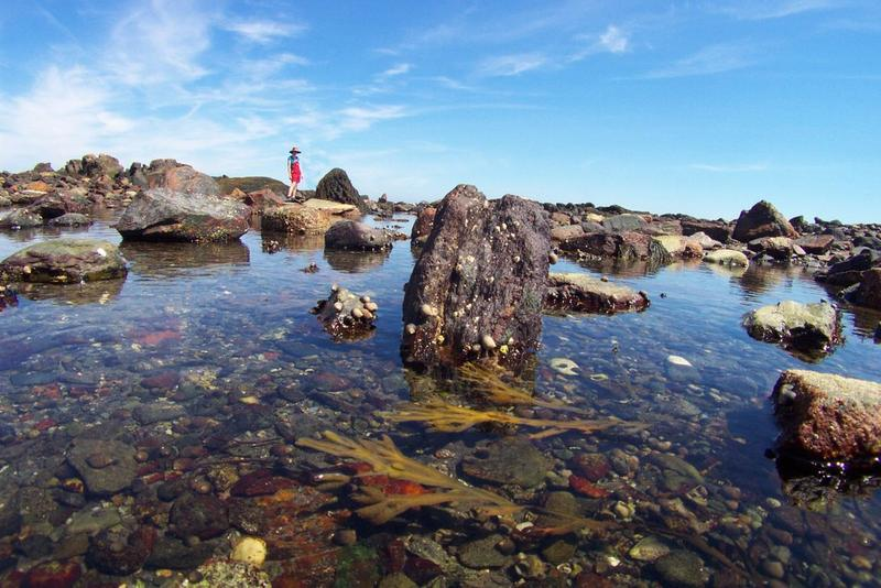 Life abounds in our rocky tide pools.