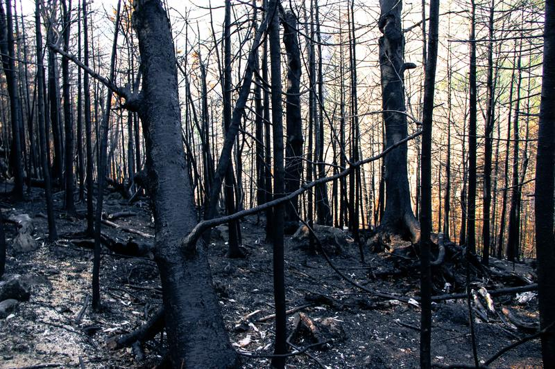 Some of the burned area near the AT.