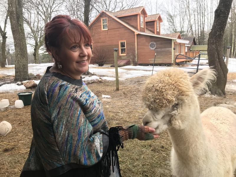 Dawn Tonkin feeds one of her alpacas at her farm in Northwood.