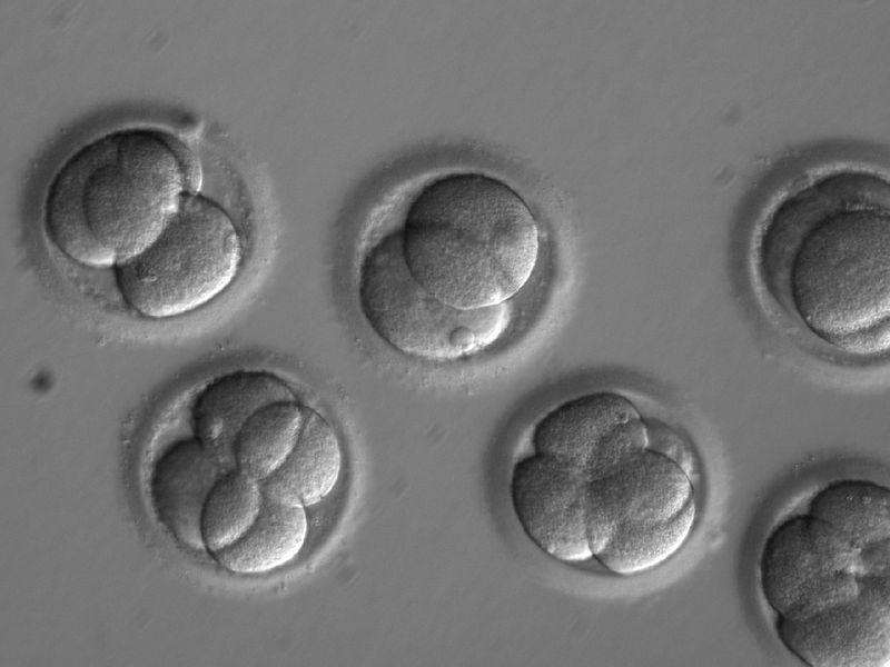 By editing a gene soon after fertilization, scientists were able to successfully fix a disease-causing mutation in human embryos.