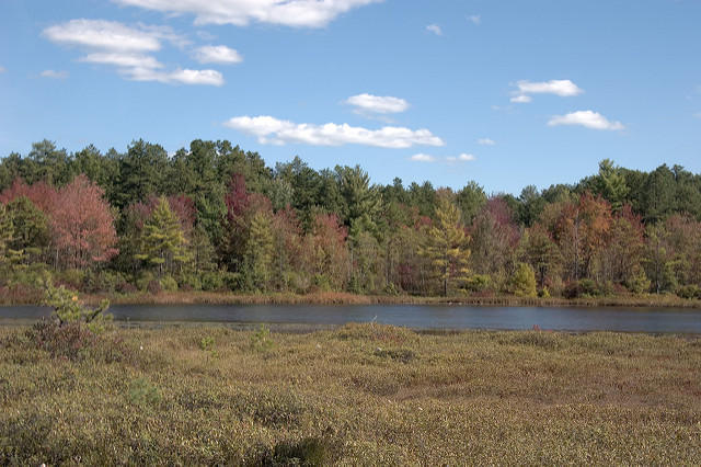 A view of Ponemah Bog, in Amherst, NH.
