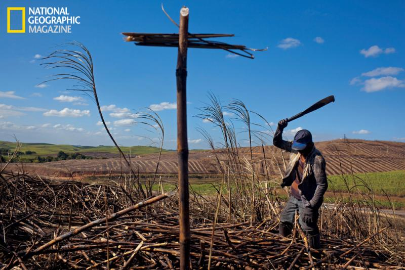 After Brazil's coastal forests were leveled for sugarcane plantations in the 16th century, millions of slaves were imported from Portuguese Africa. Today farms like this one in the northeast near Rio Formoso produce sugarcane for ethanol, a major export.