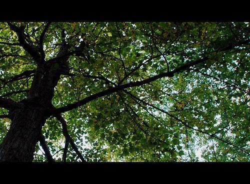 "A ""tree factory""."