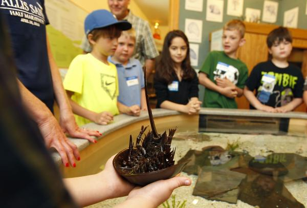 A student holds a horseshoe crab at Great Bay Discovery Center in Greenland, N.H
