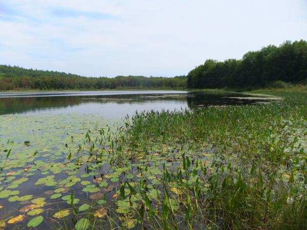 Bog Pond in Andover offers a unique habitat for a variety of plants and wildlife species.