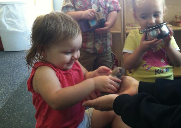 A student plays with a hamster at Live and Learn early education center in Lee.