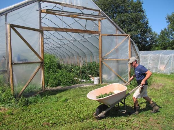 On his Montpelier, VT farm, Joe Buley harvests cucumbers for gazpacho and cucumber dill soups.