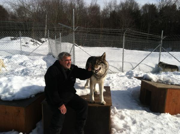 Tanner Brewer, manager of NEWARC, gives Emerald, a high-content wolf-dog hybrid, some scratches.