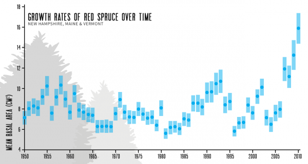 Measurements of the basal area (size of the trunk near the bottom) of red spruce have shot up in recent years, and while climate change is near the top of the list of theories for why, scientists have yet to determine how much of the growth is due to warmer temperatures and more CO2.