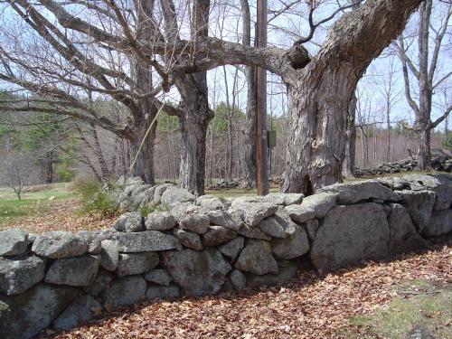 something wild  stonewalls as landscape