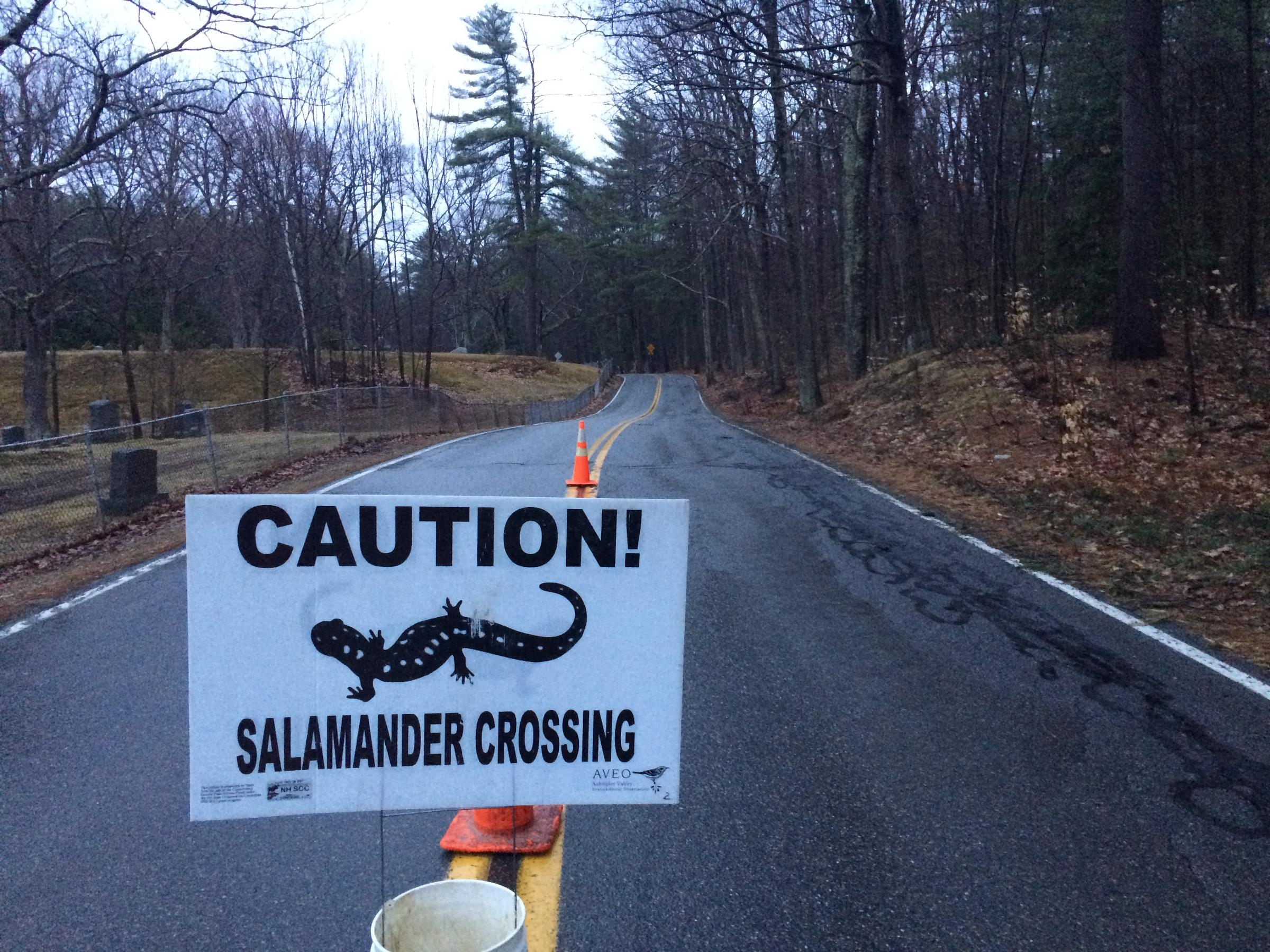 Image result for salamander crossing signs Harris Center for Conservation Education