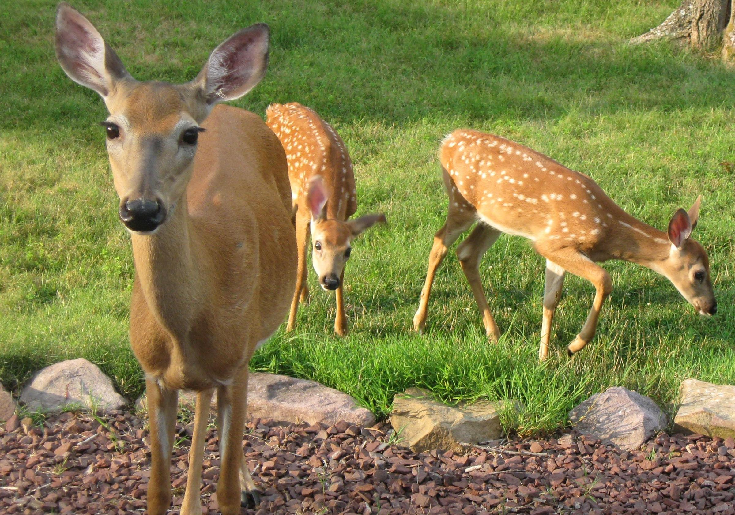Granite Geek: Whatu0027s The Best Way To Keep Deer Out Of Your Garden?