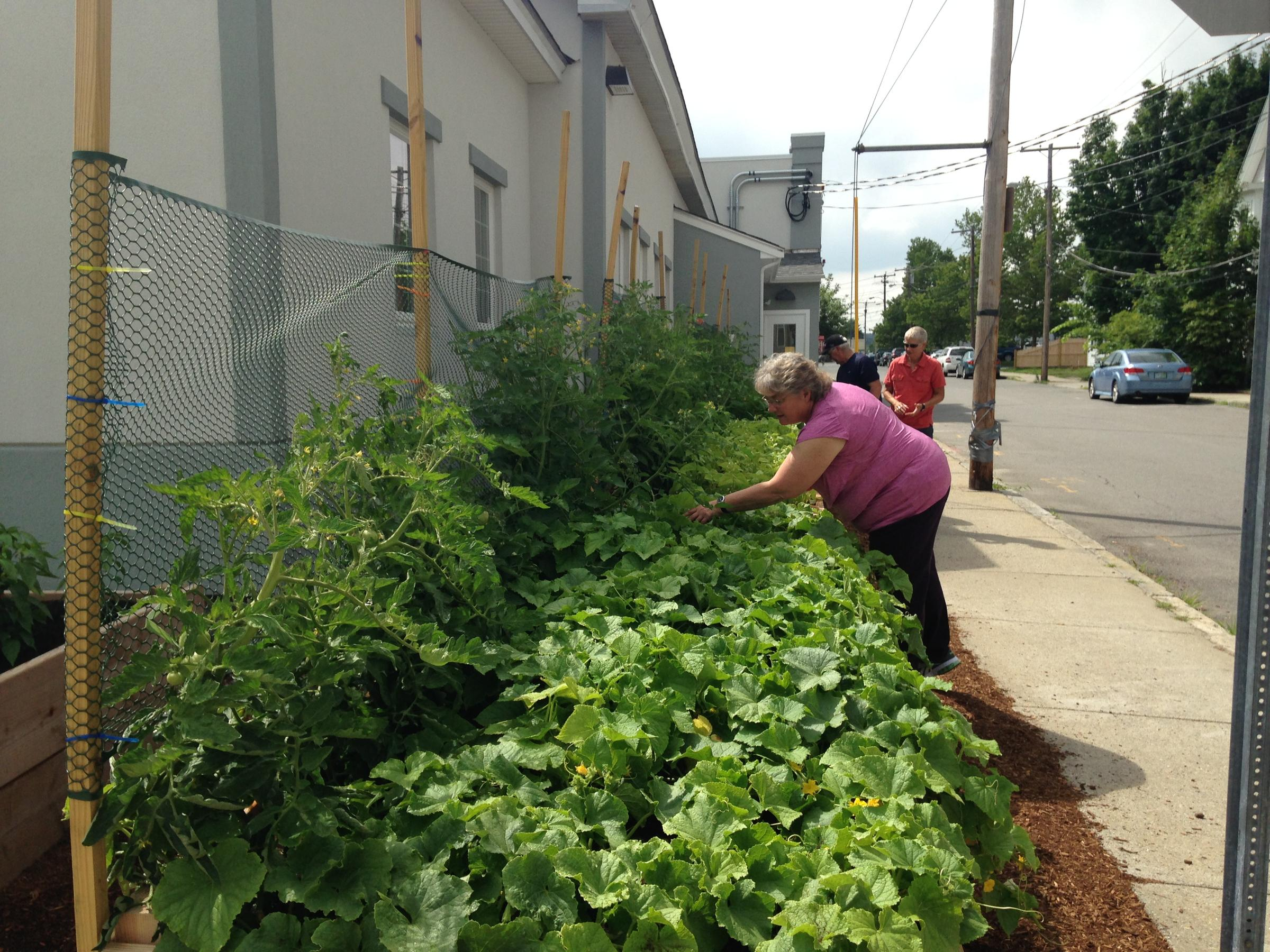 Foodstuffs: In Nashua, A Community Effort to Grow Food for Those ...