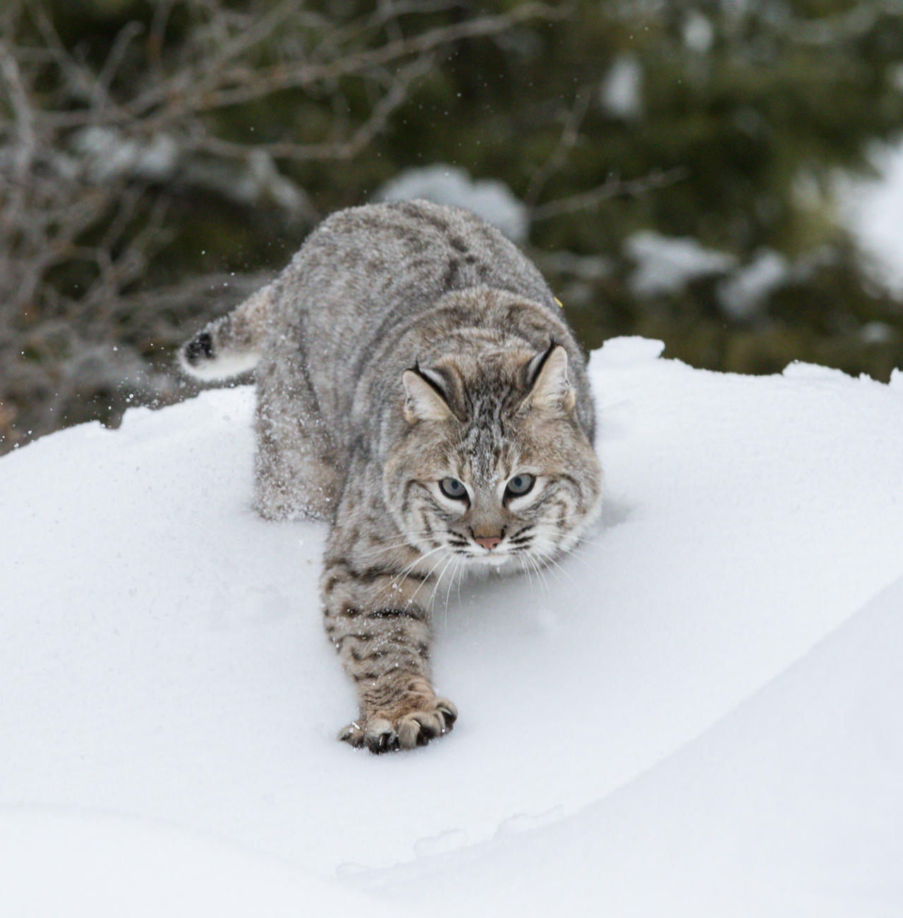 how to start a business with a bobcat