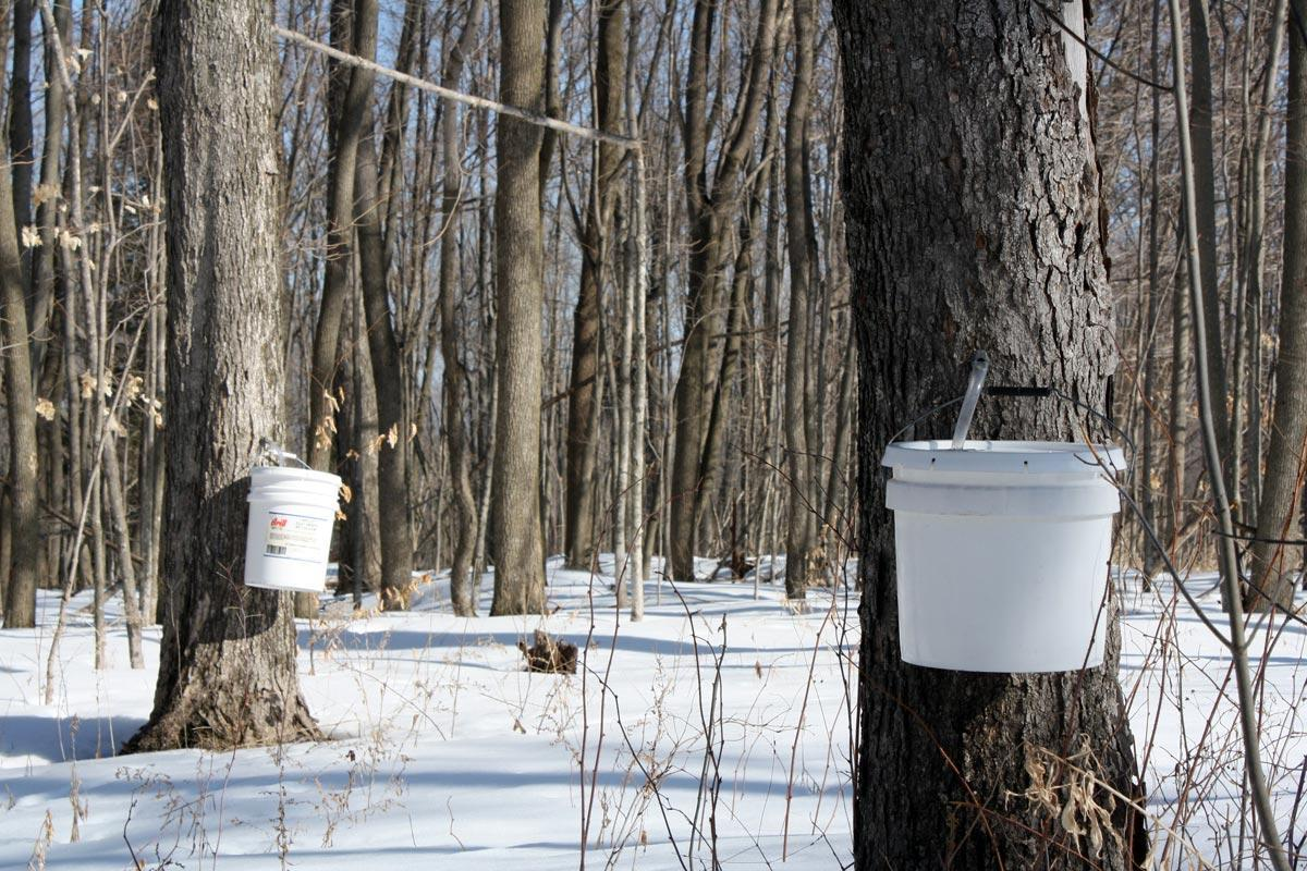 FILE. Maple syrup production in New Hampshire has ...