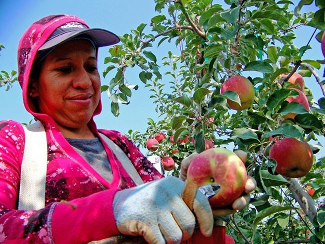 Many Northwest farmers have been facing a serious worker shortage.