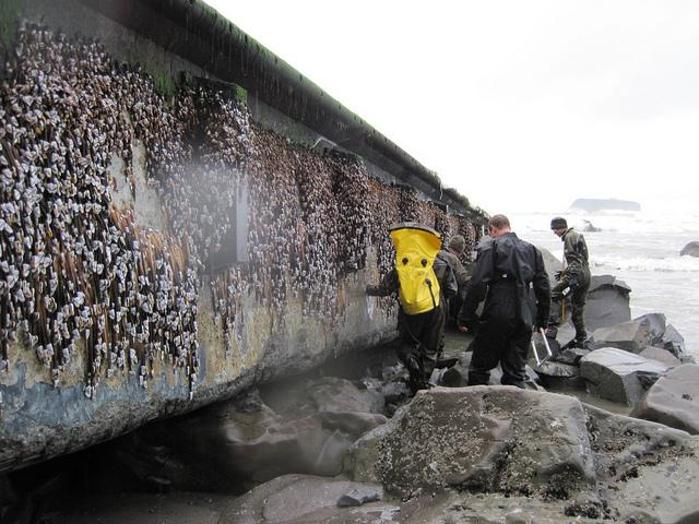 Scientists inspect the marine life clinging to the dock.