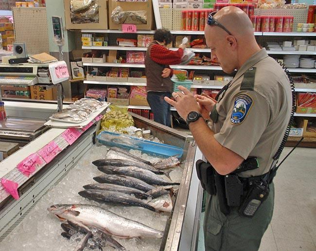 WDFW Officer Erik Olson inspects a seafood market for mislabeled fish.