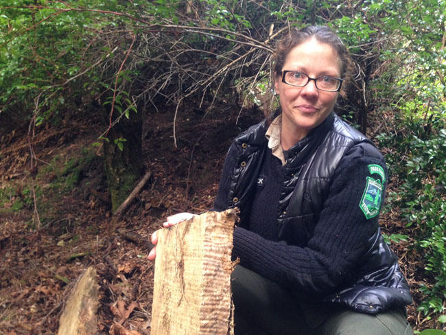 Washington State Parks Ranger Mischa Cowles holds a piece of figured maple left behind at a theft site on Harstine Island in southern Puget Sound.