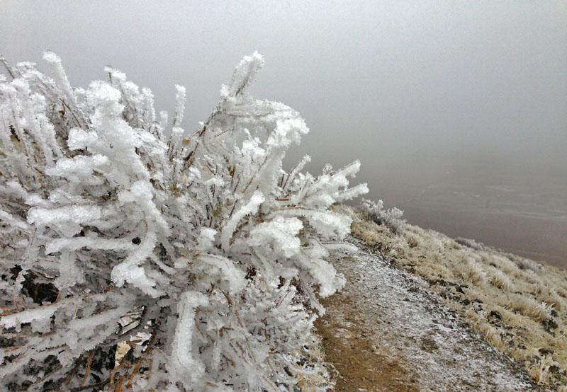 Ice coats old sagebrush like frosting on Badger Mountain near the Tri-Cities, Wash.