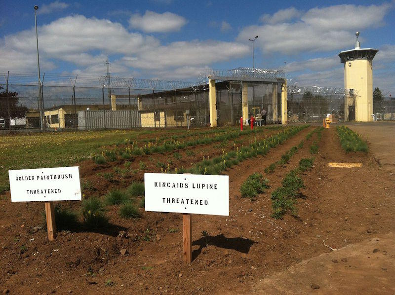 Prison inmates enlisted to grow threatened plants nw news network - Gardening in prisons plants and social rehabilitation ...