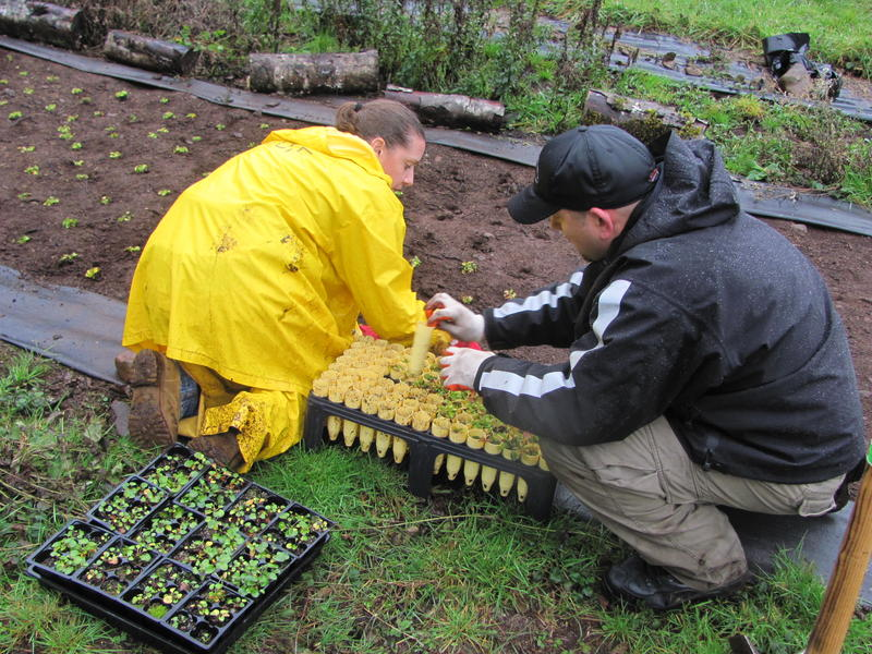 Inmate Adrianne Crabtree and ODOC Captain Chad Naugle plant violets in a meadow of the Siuslaw National Forest to support recovery of the threatened Oregon Silverspot butterfly.