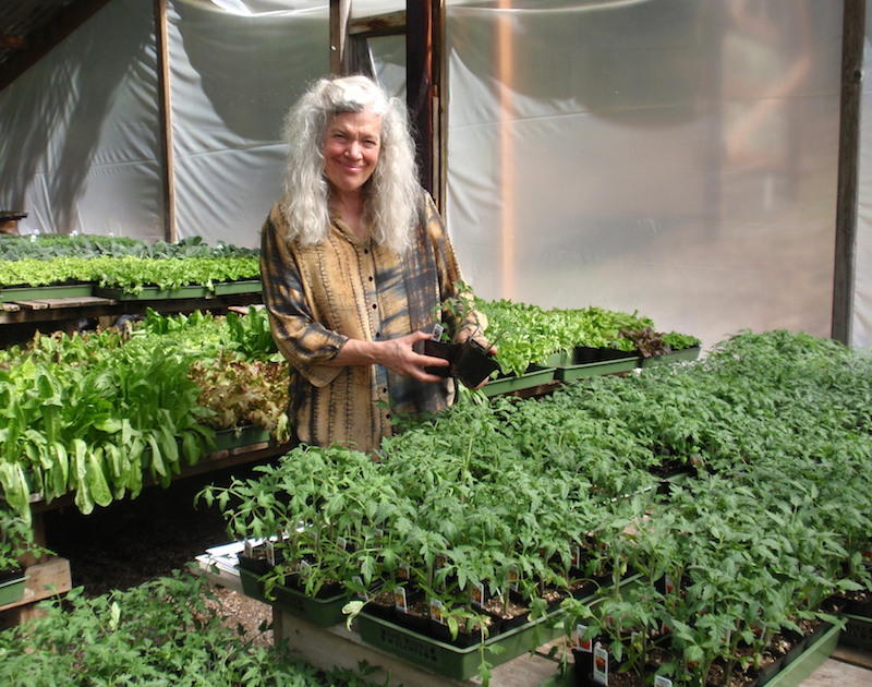 Log House Plants co-owner Alice Doyle holds an Indigo Rose tomato start at her nursery near Cottage Grove, Oregon.