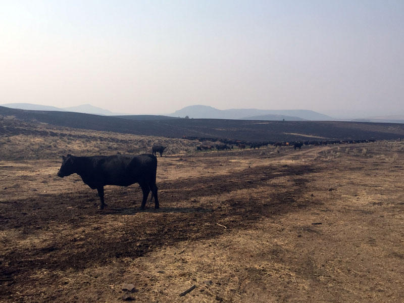 The Soda Fire has burned more than 400 square miles -- most of it federally-managed grazing land.