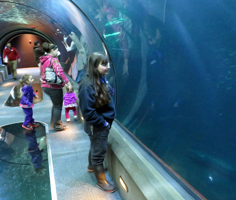 Assistant Curator Evonne Mochon Collura observes a school of yellowtail jacks in the open sea display at the Oregon Coast Aquarium.