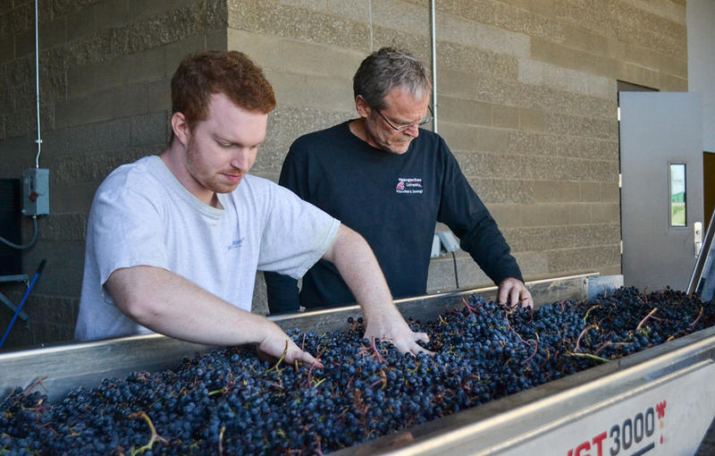 Thomas Henick-Kling, right, is the head of the Washington State University's viticulture and enology program. He says more-precise grape growing techniques will be required to continue producing high quality wines with coming climate change.
